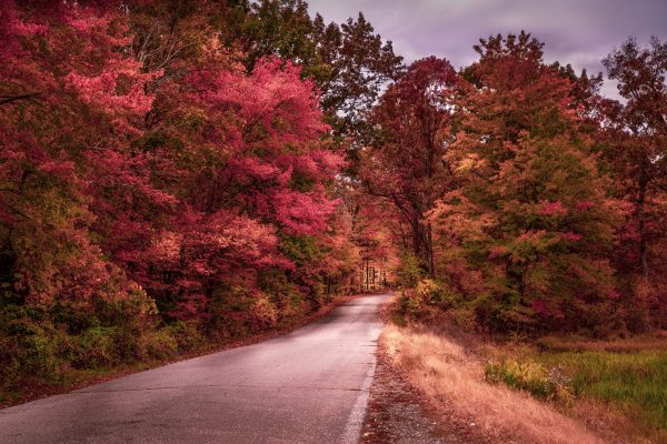 Road Full of Color