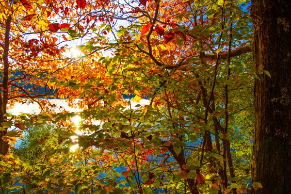 Fall Colors, Kittatinny Valley State Park, New Jersey
