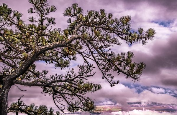 Branches of Life, High Point New Jersey