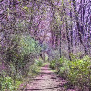 The Blooming Spring Path