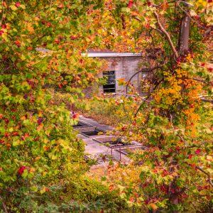 Fall Color Scene