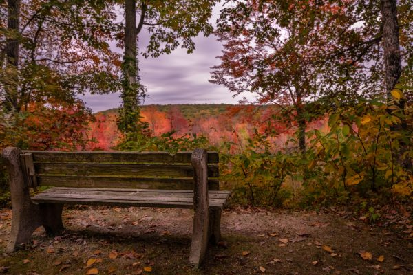 Wooden Bench in the Fall