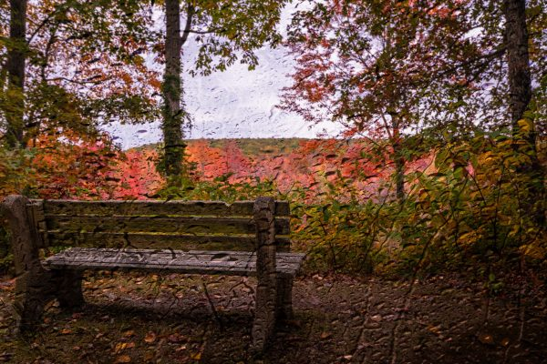 Wooden Bench in the Fall (Rain Overlay)