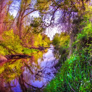 Magical Sunset Reflections along the Riverbank