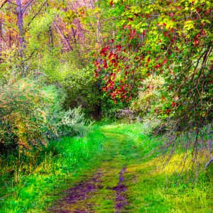 Landscape Spring Path. Life can be as Colorful as you imagination allows..